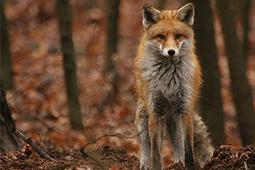 Fuchsjagd Jagdausrüstung