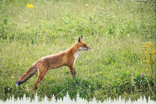 Fuchsjagd-Ausrüstung