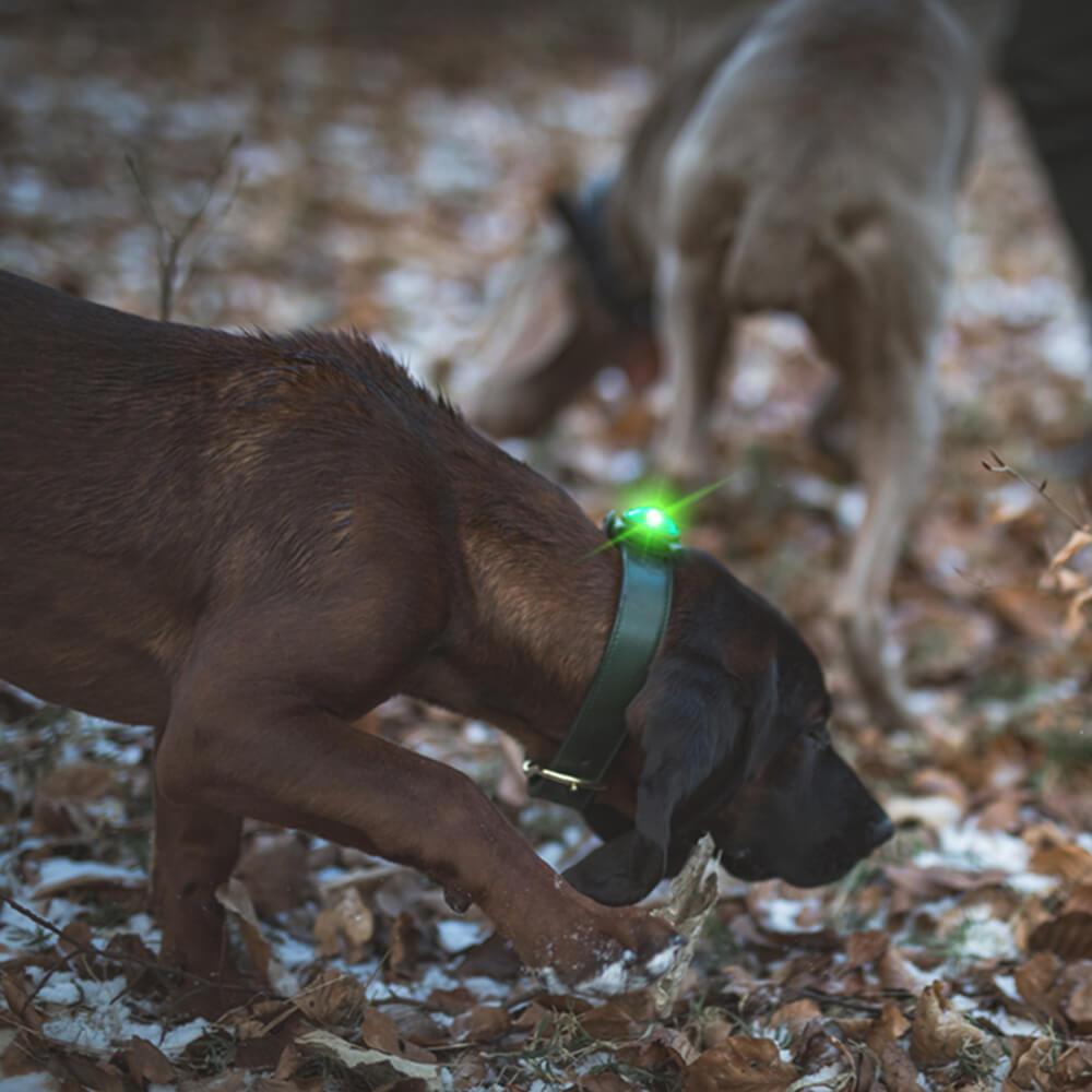 Orbiloc Dog Dual Hundelicht
