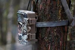 Wildkameras für die Jagd