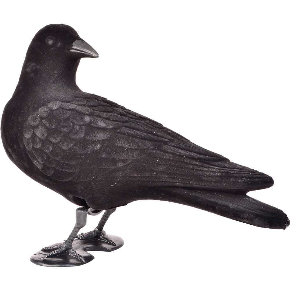 Beflockte Lockkrähe - rückwärts äugend - Lockvögel